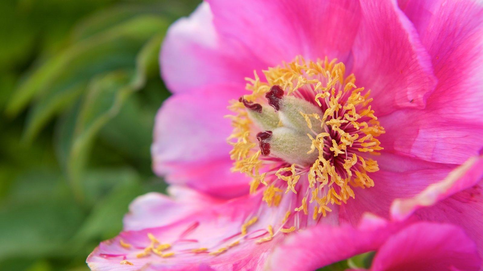 Arktisk alpin Botanisk hage que inclui flores