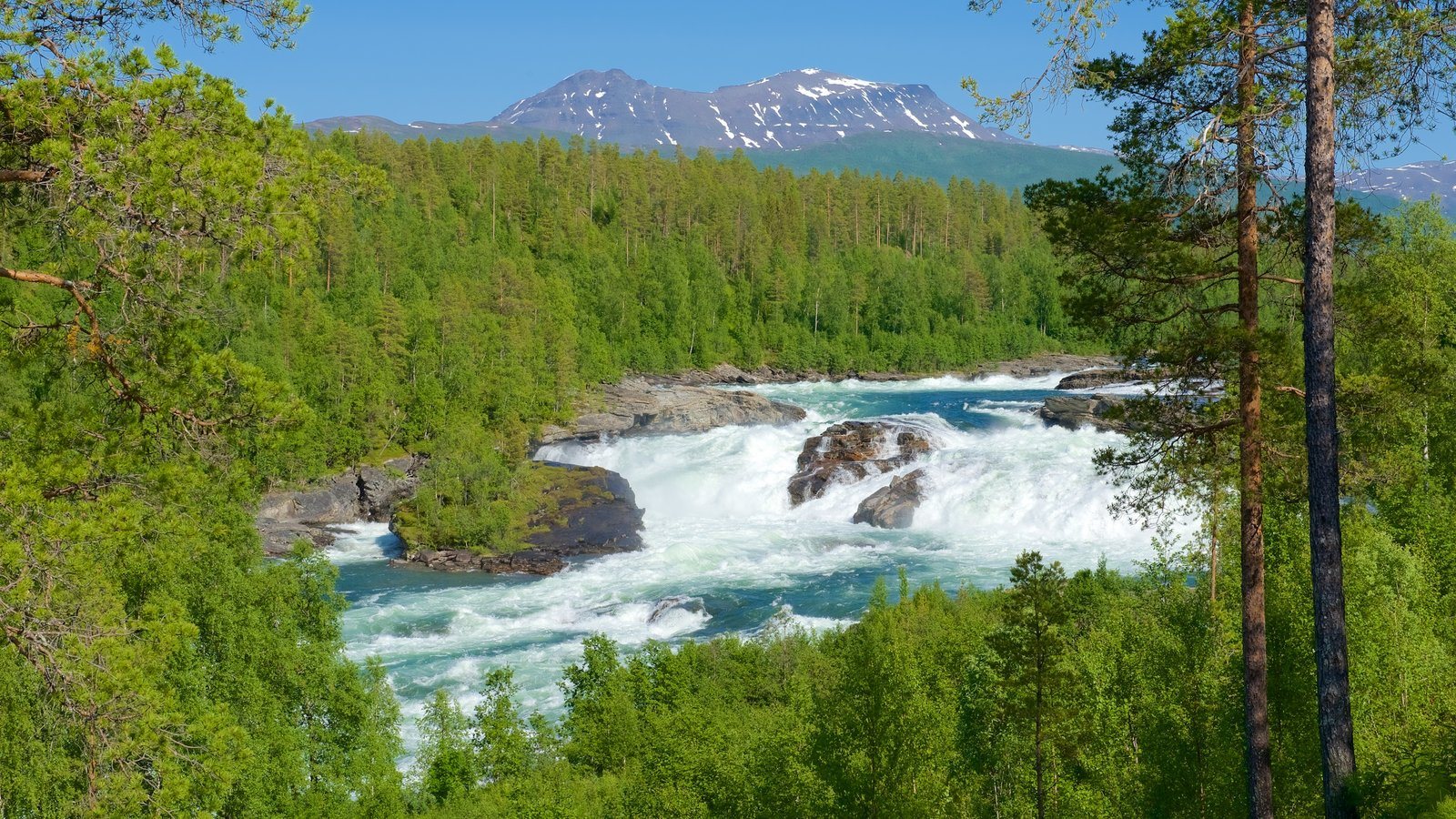 Maalselvfossen Waterfall showing forest scenes and rapids