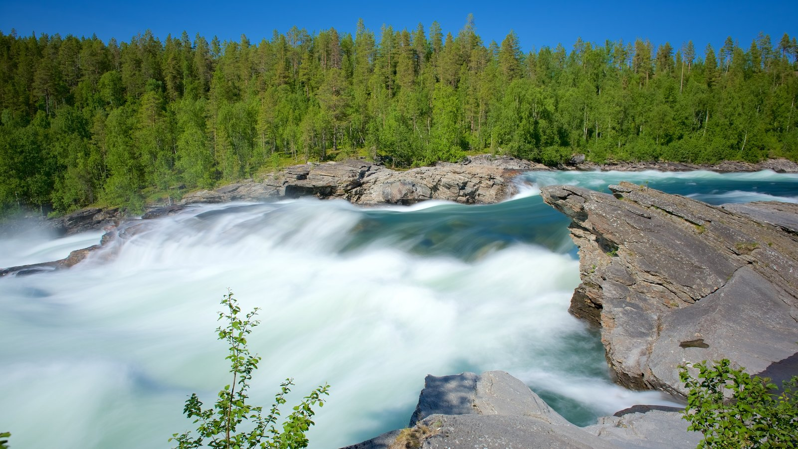 Maalselvfossen Waterfall which includes forest scenes and rapids