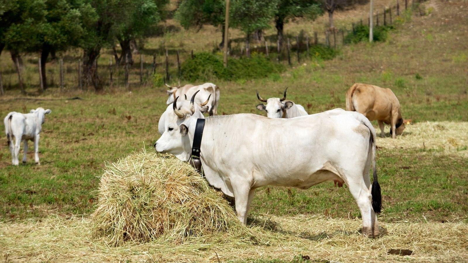 Vieste featuring land animals