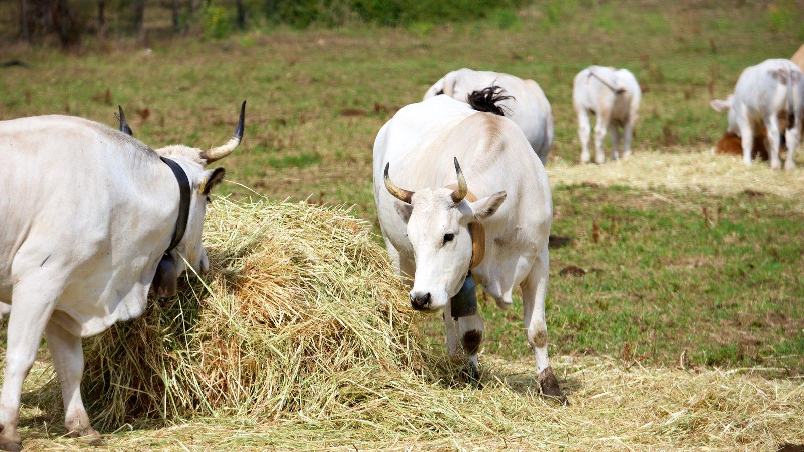 Vieste showing land animals