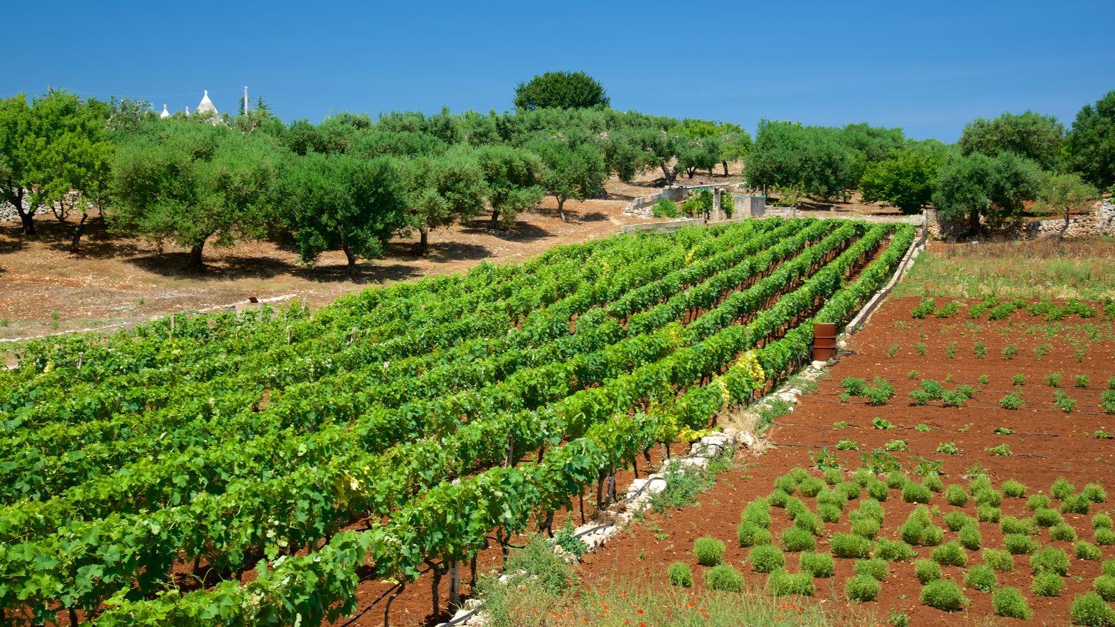 Brindisi featuring farmland