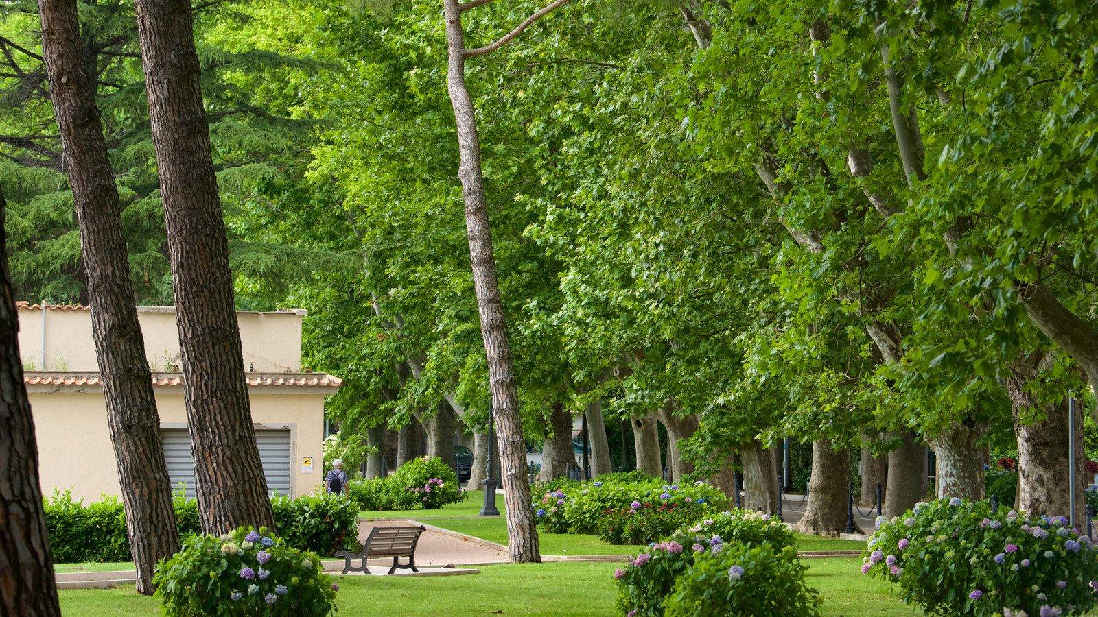 Lake Bolsena featuring a garden