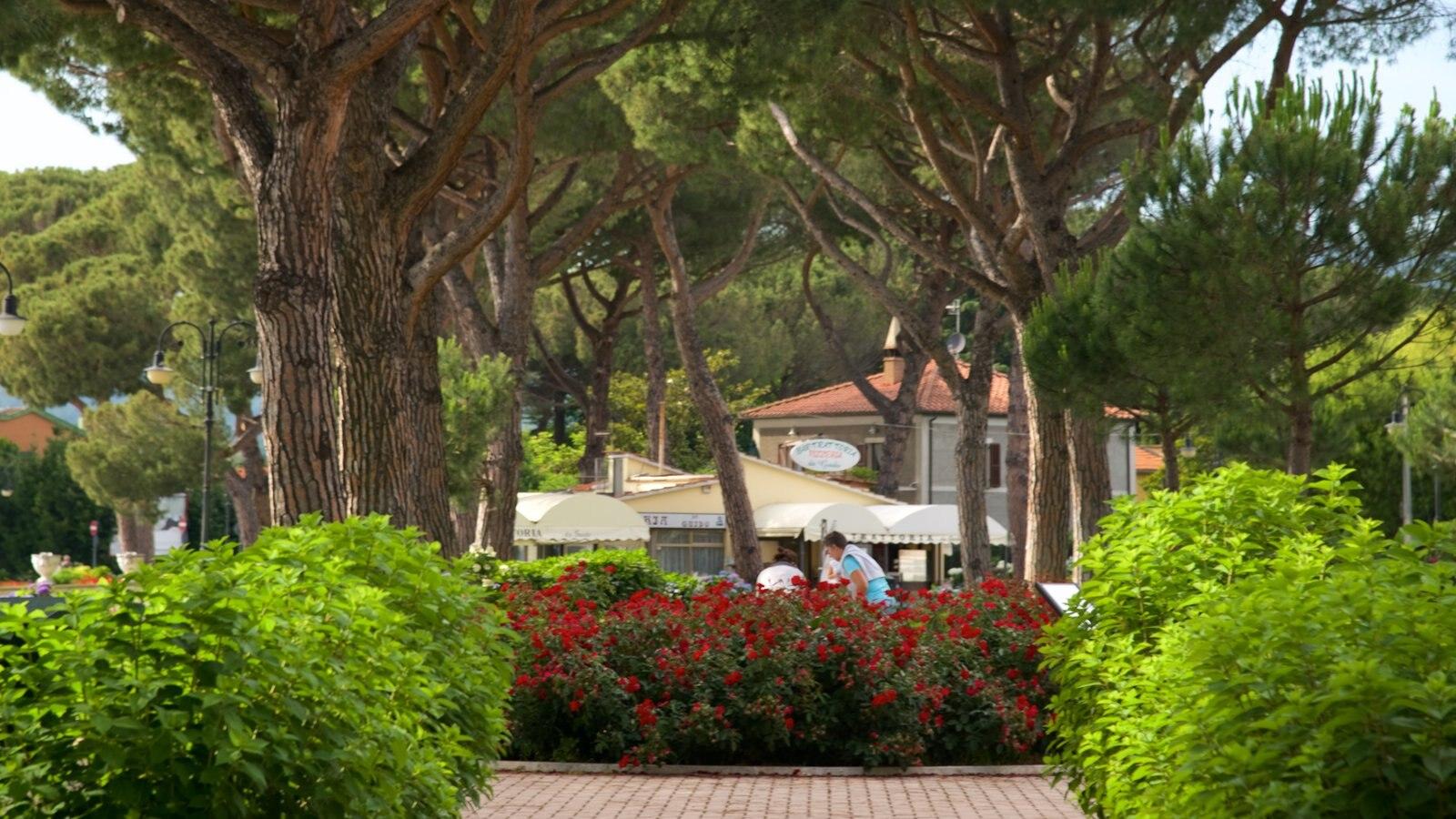 Lake Bolsena showing a garden