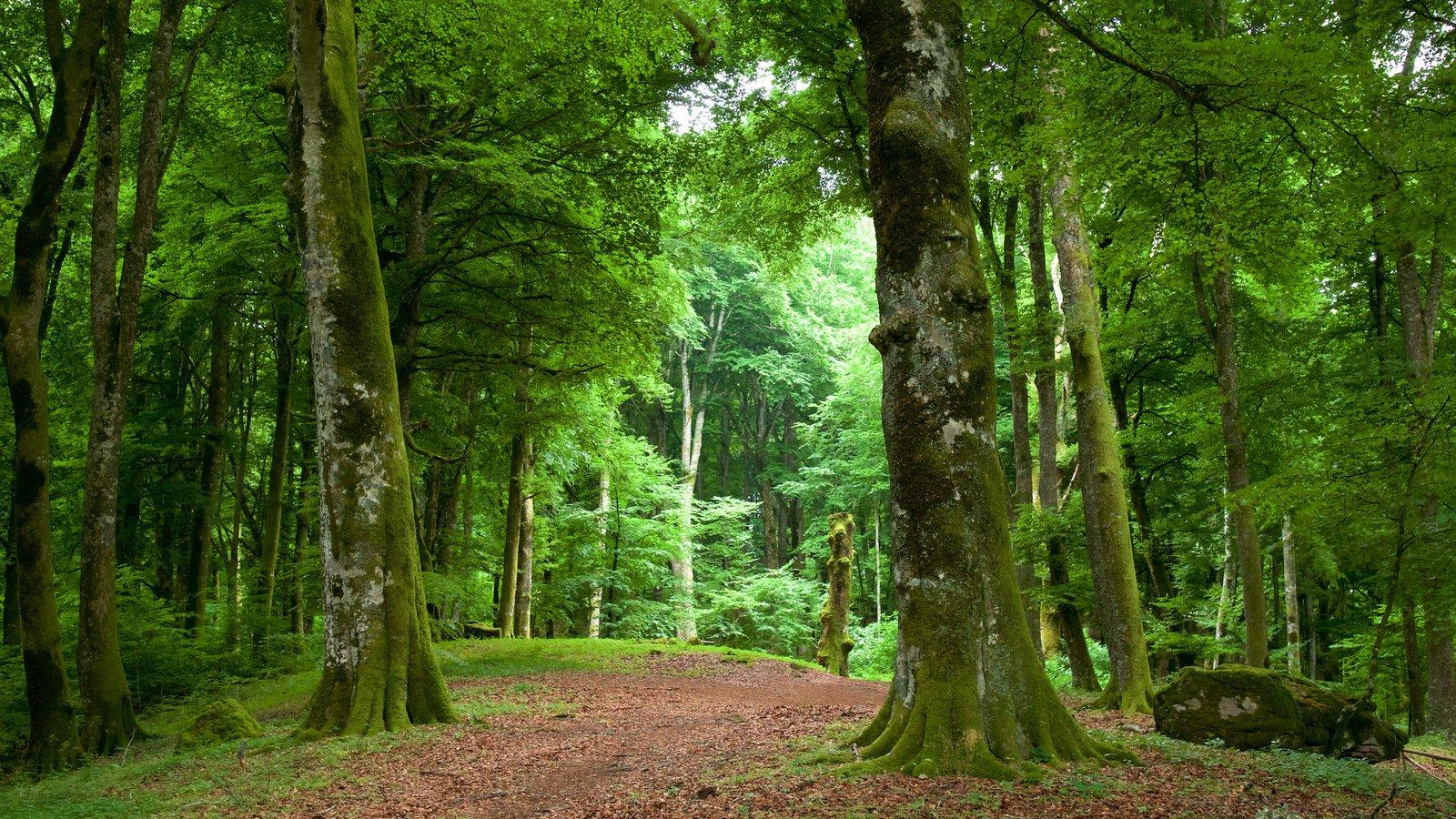 Soriano nel Cimino which includes forest scenes