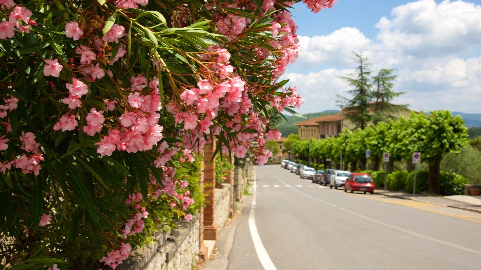 Radda in Chianti which includes flowers