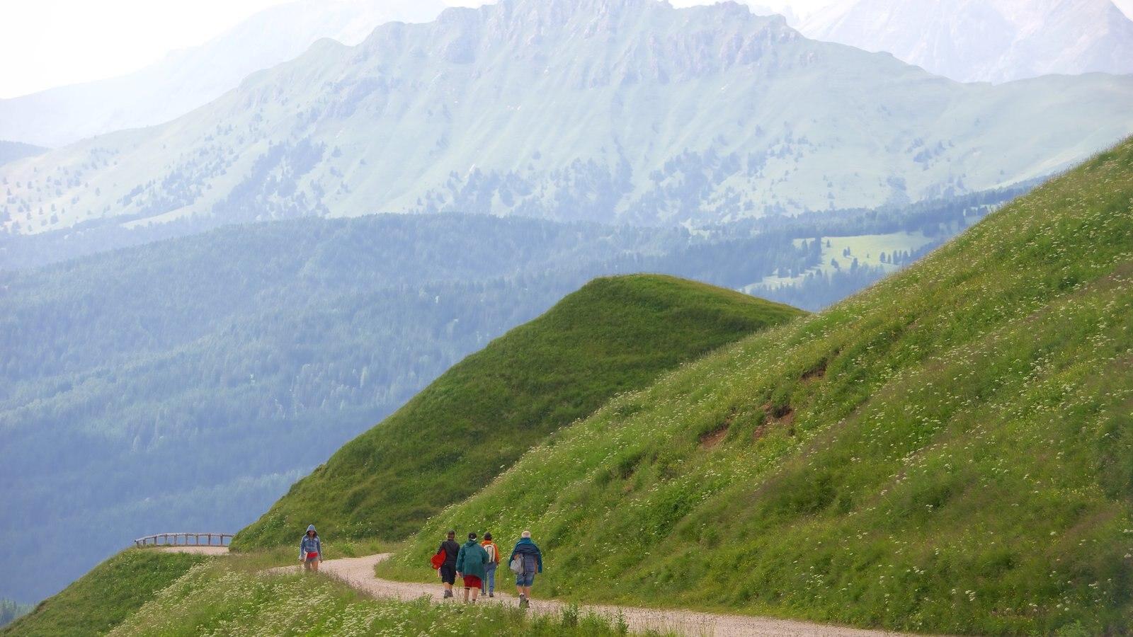 Passo Rolle mostrando escenas tranquilas y senderismo o caminata