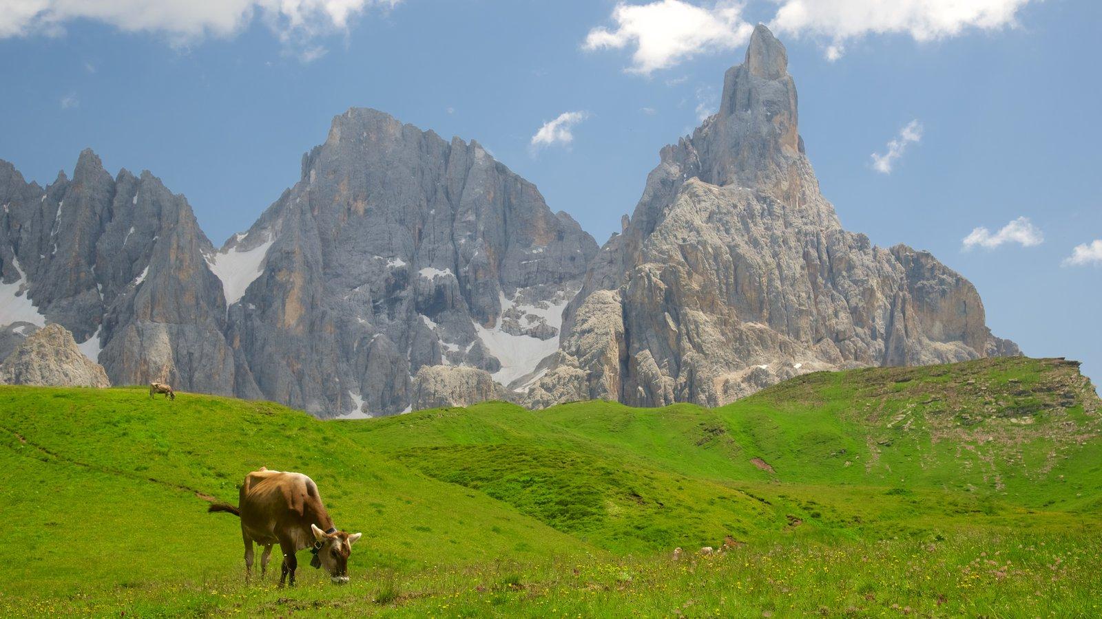 Passo Rolle que incluye montañas