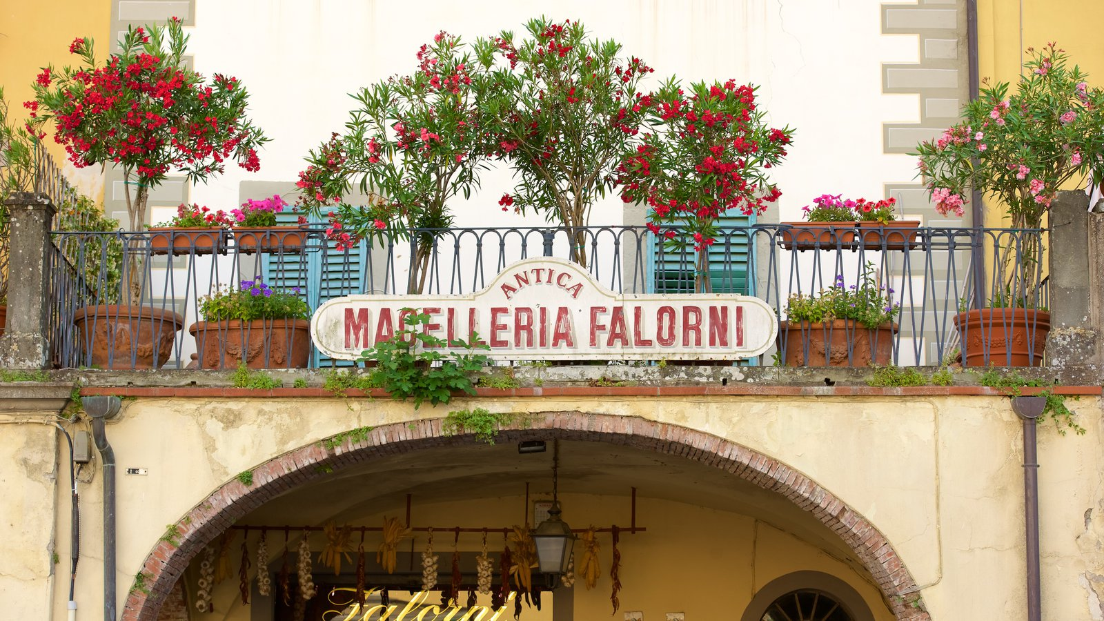 Greve in Chianti showing a small town or village, signage and flowers