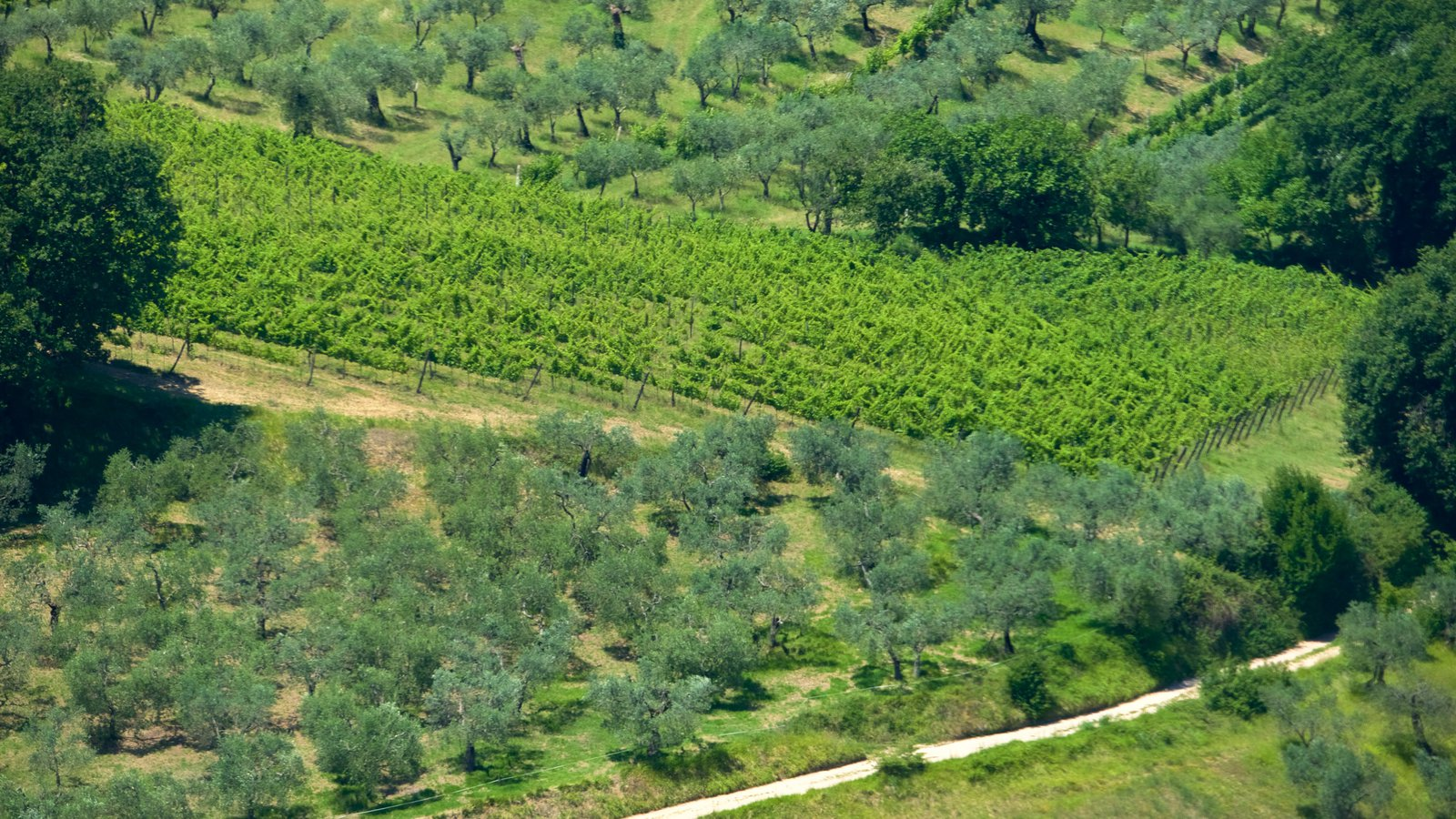 Montefalco showing farmland