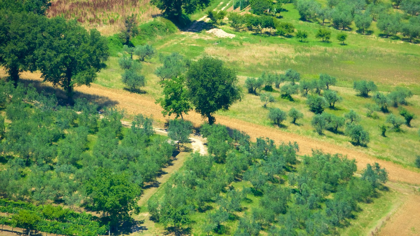 Montefalco featuring farmland