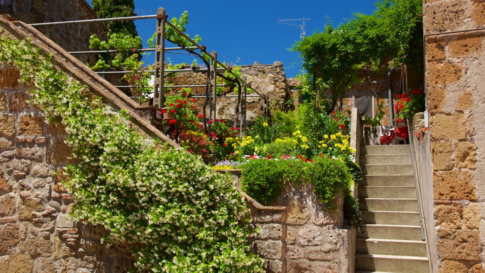 Sovana featuring flowers