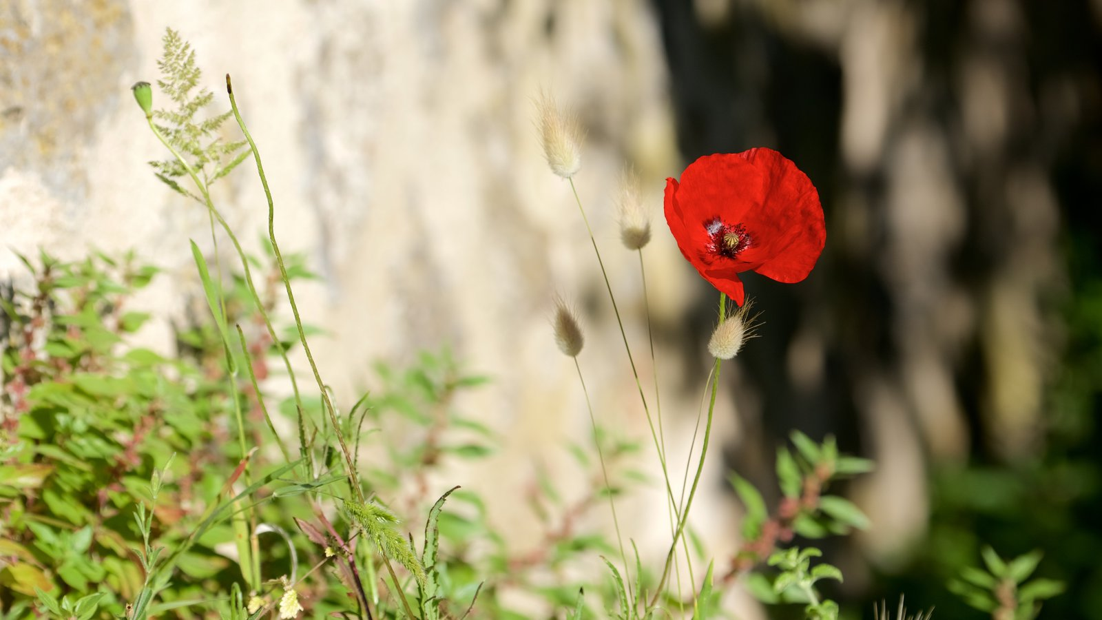 Talamone caracterizando flores