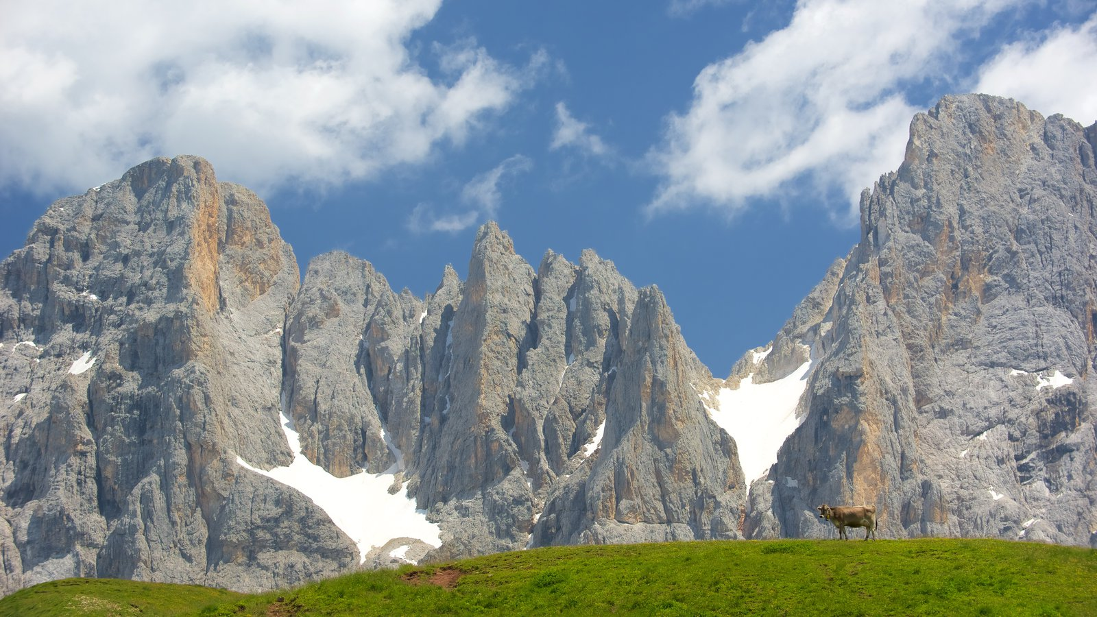 Passo Rolle which includes skyline, land animals and mountains