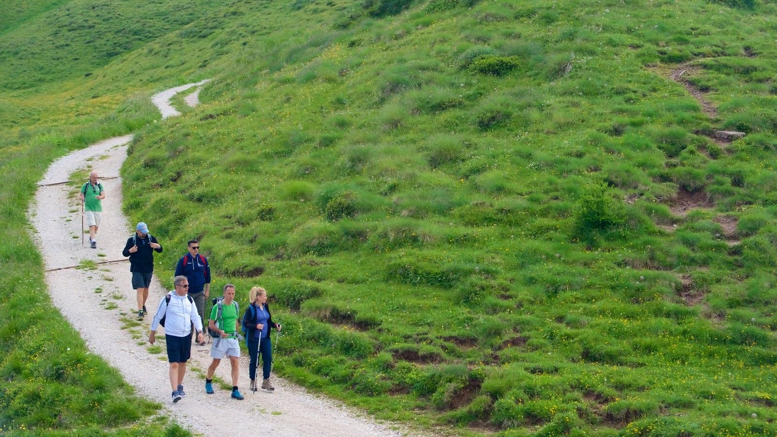 Passo Rolle ofreciendo senderismo o caminata y también un pequeño grupo de personas