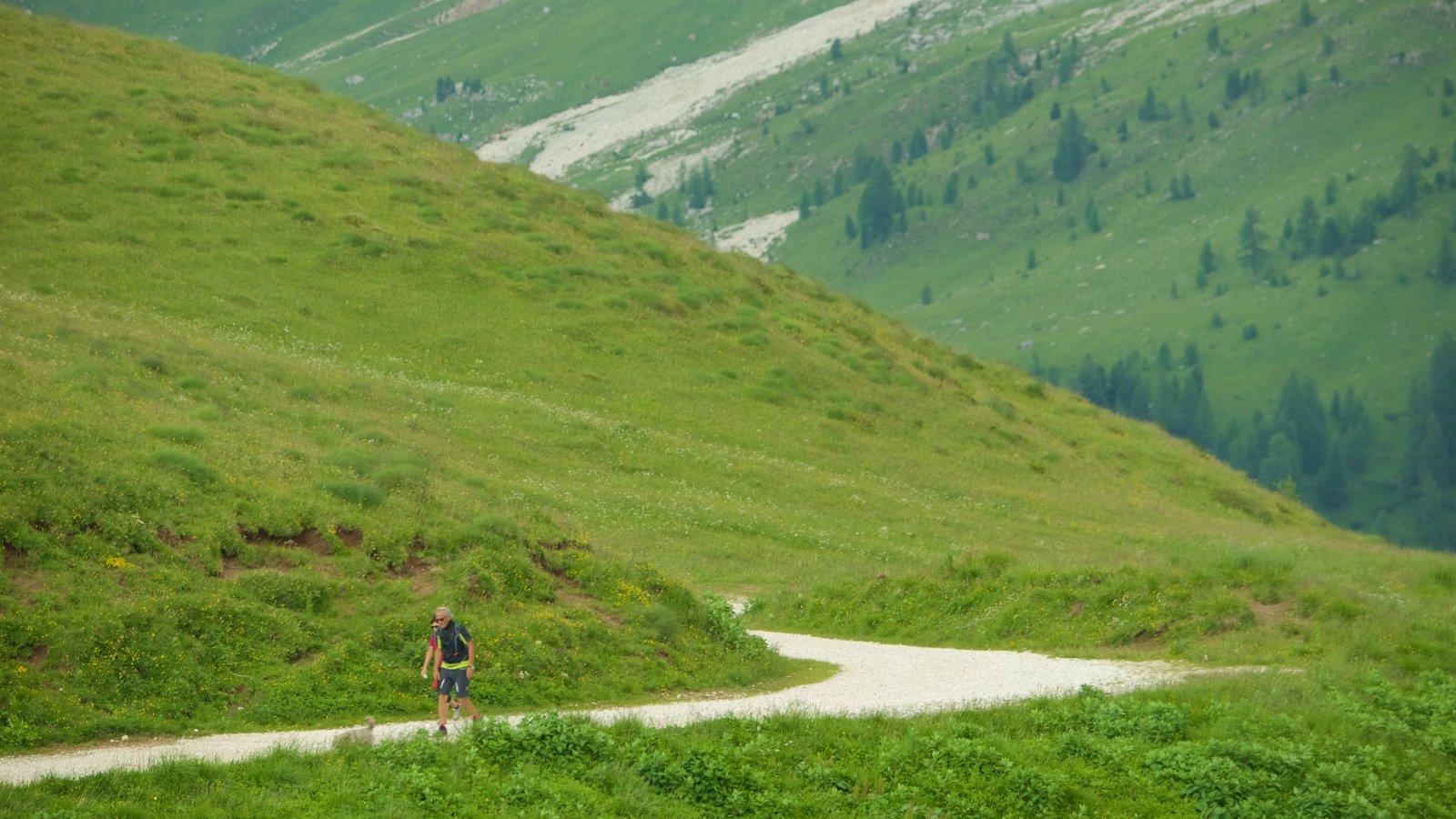 Passo Rolle que incluye senderismo o caminata y montañas y también un hombre