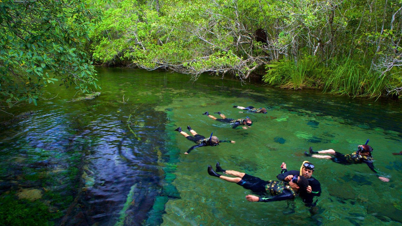 Bonito que inclui um lago ou charco e snorkel assim como um pequeno grupo de pessoas