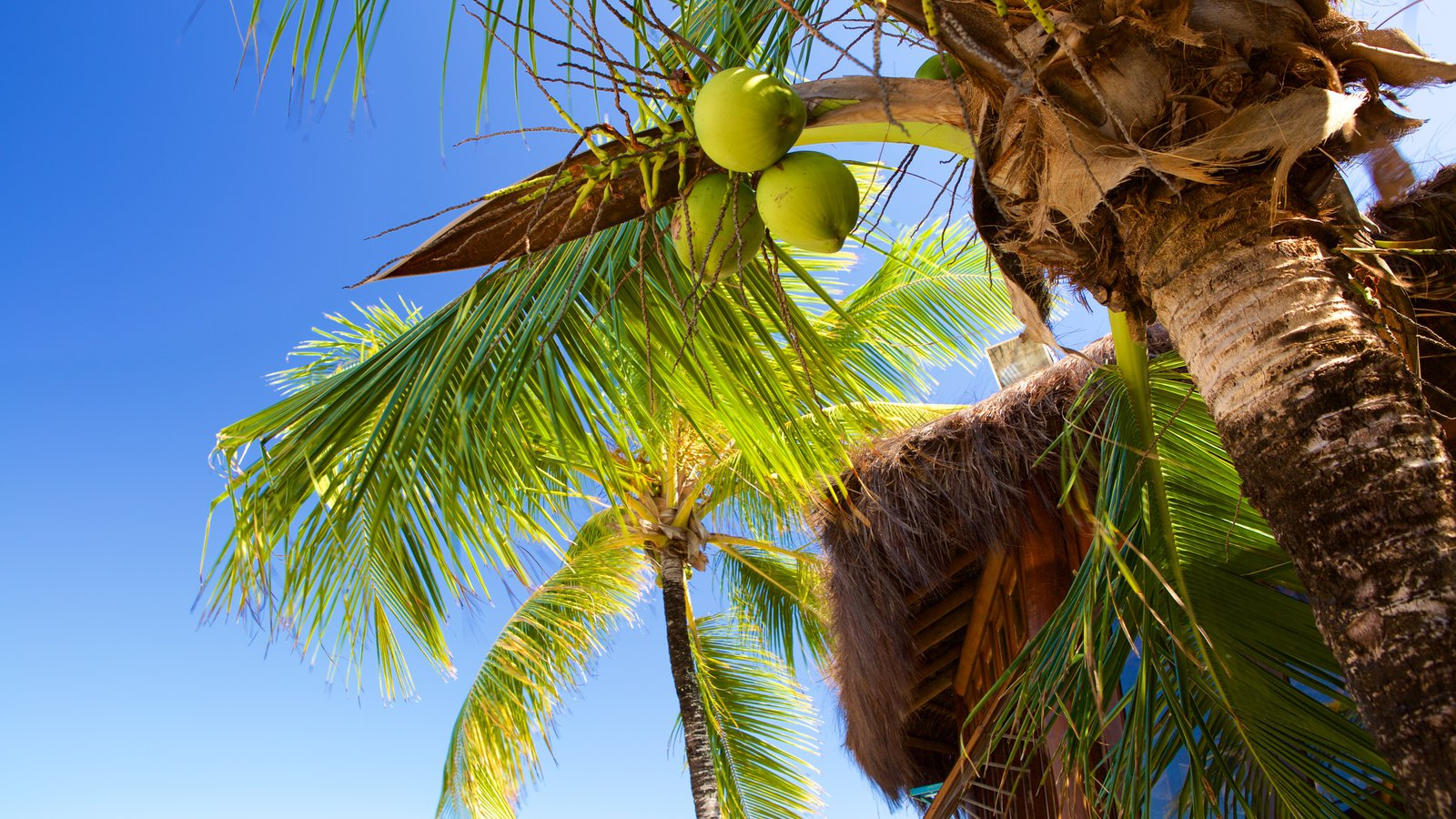 Praia do Mutá que inclui comida e cenas tropicais
