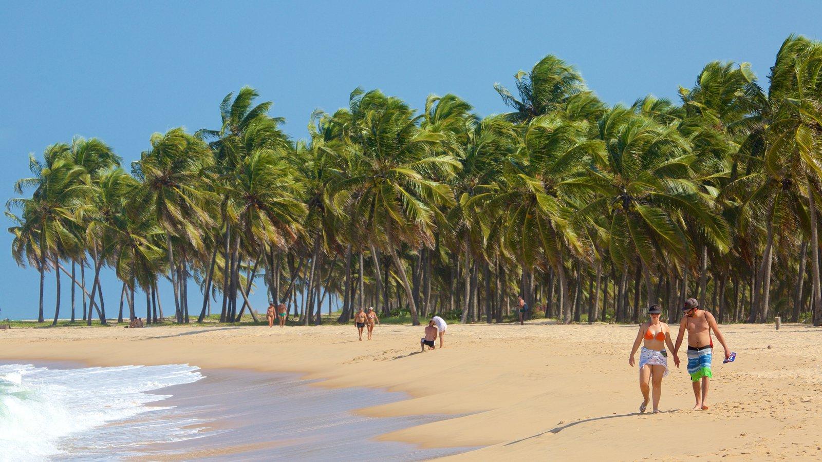 Maceió mostrando cenas tropicais e uma praia assim como um casal