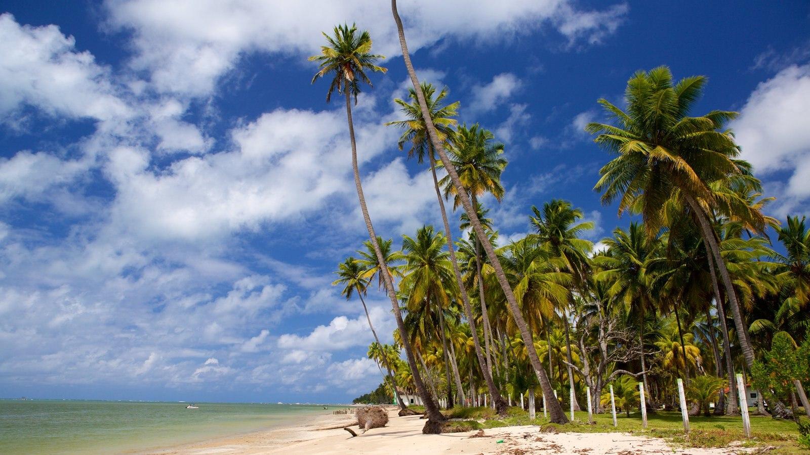 Tamandaré que inclui uma praia de areia e cenas tropicais