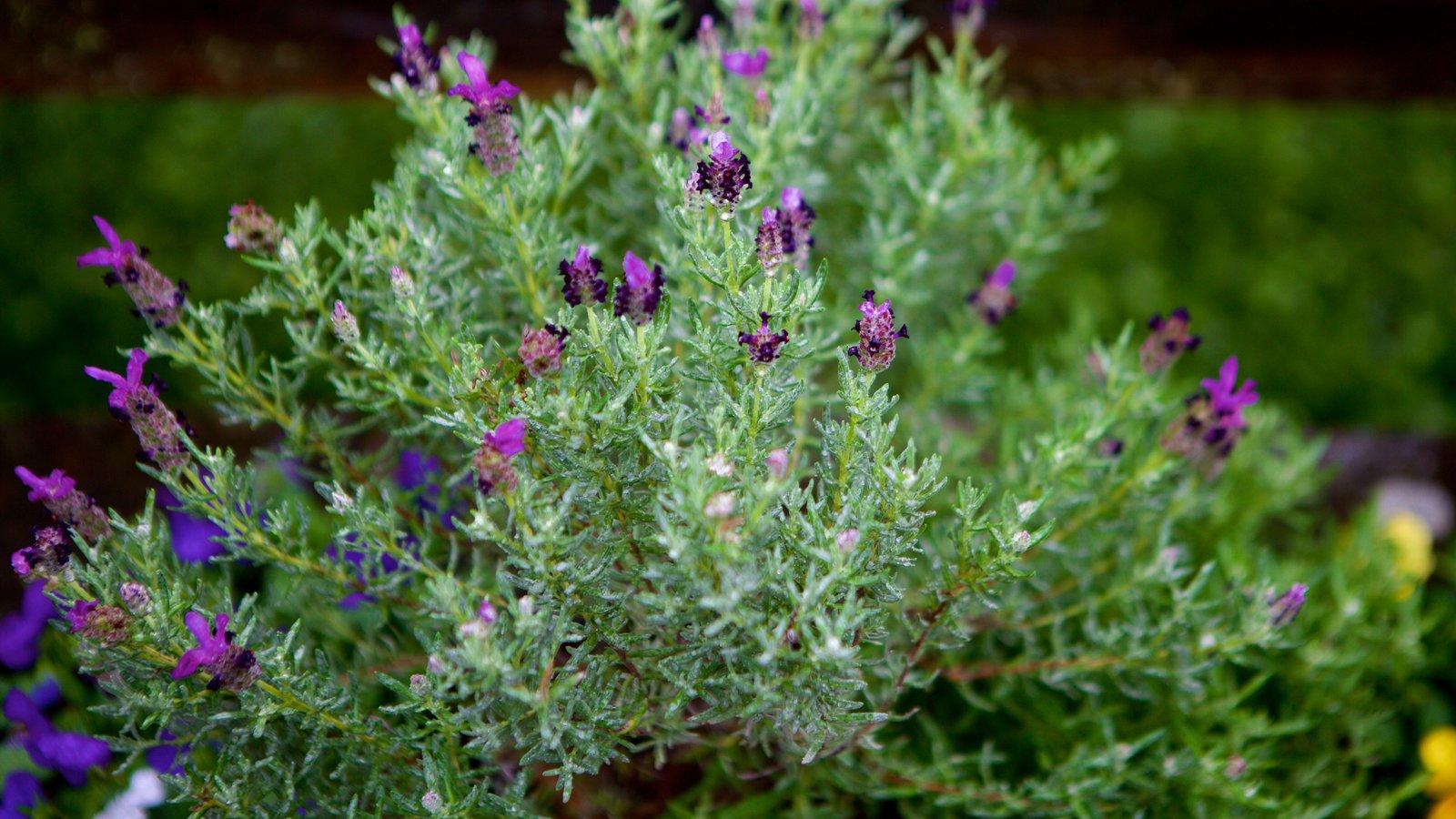 Le Jardin Parque de Lavanda caracterizando flores
