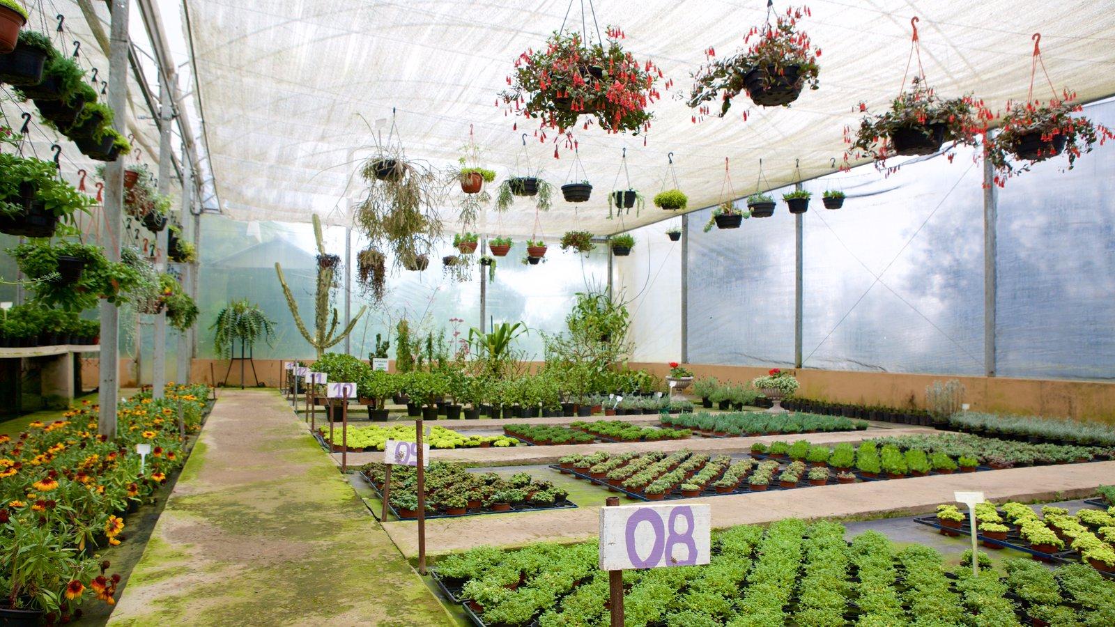 Le Jardin Parque de Lavanda que inclui vistas internas e flores