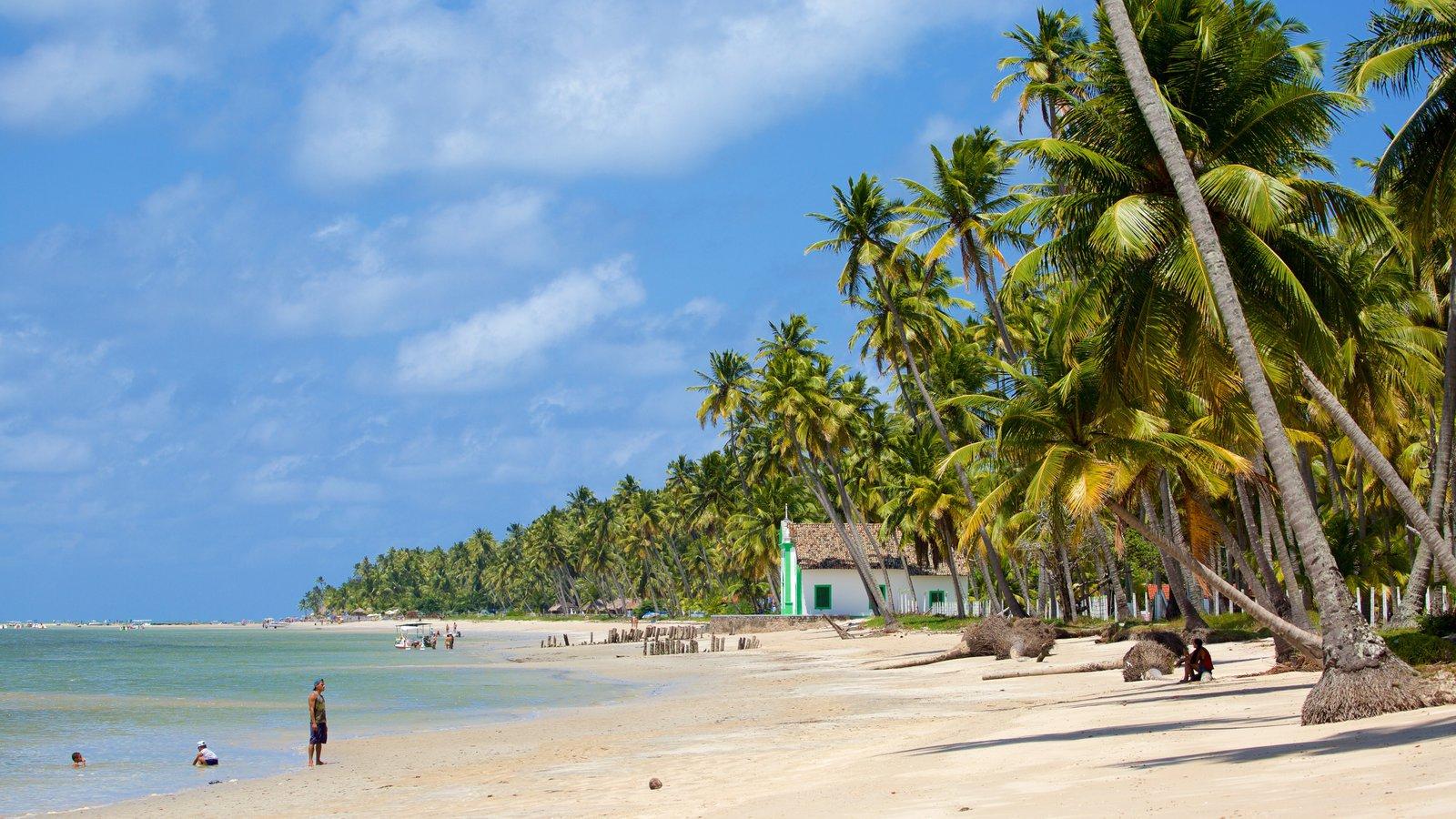 Tamandaré que inclui cenas tropicais, uma praia de areia e paisagens litorâneas