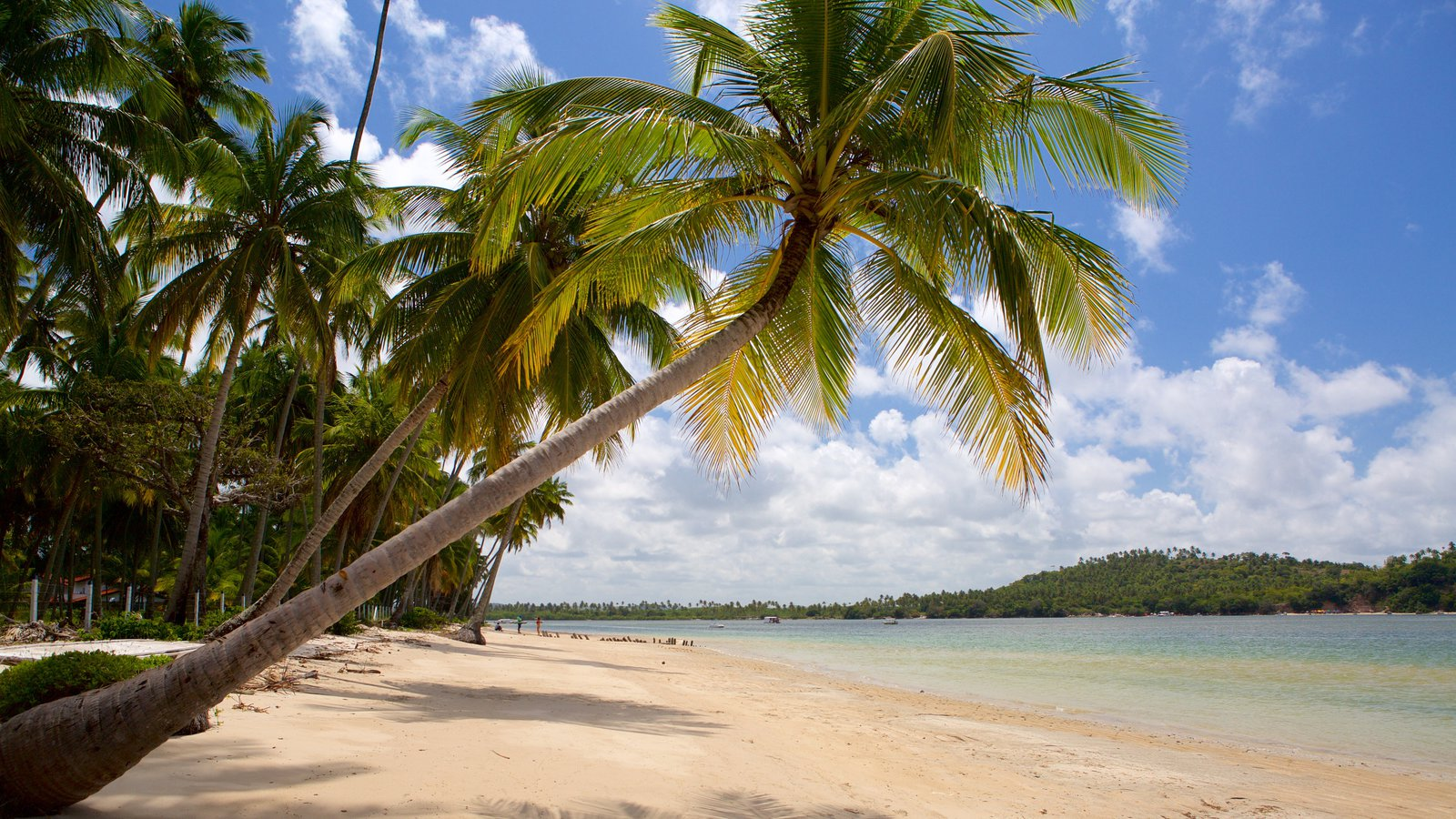 Tamandaré caracterizando cenas tropicais, uma praia de areia e paisagens litorâneas