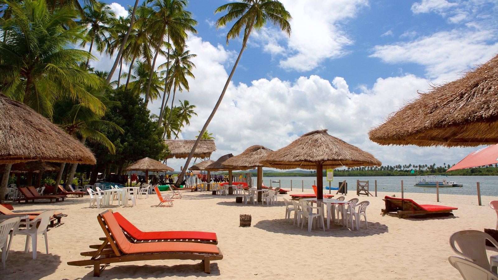 Tamandaré caracterizando cenas tropicais, uma praia e paisagens litorâneas