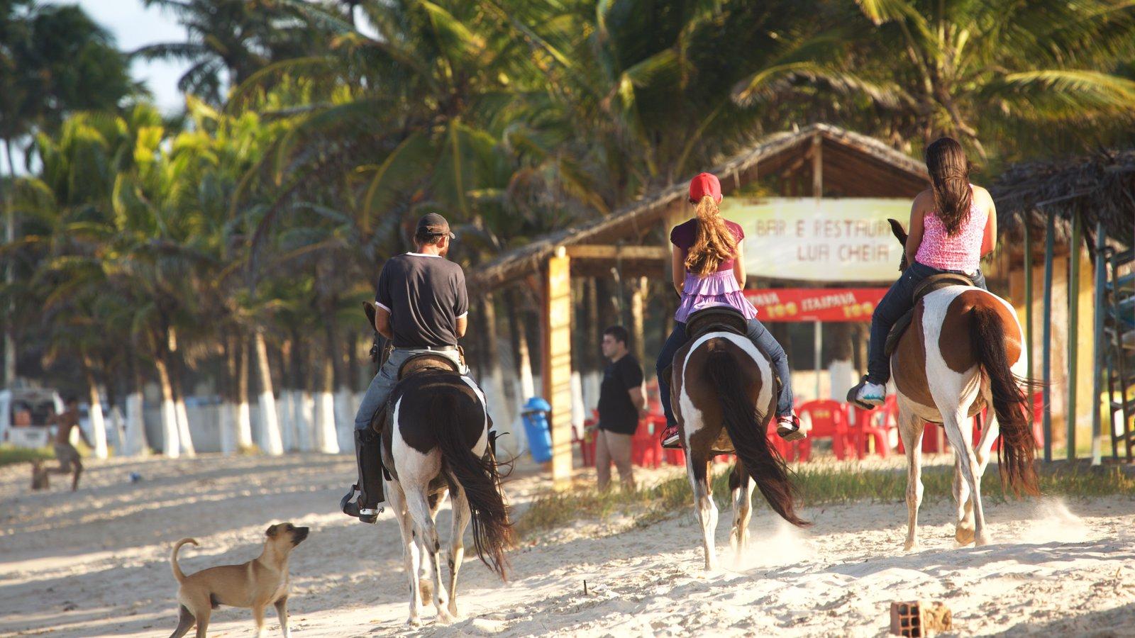Praia de Maracaípe que inclui uma praia, cenas tropicais e paisagens litorâneas