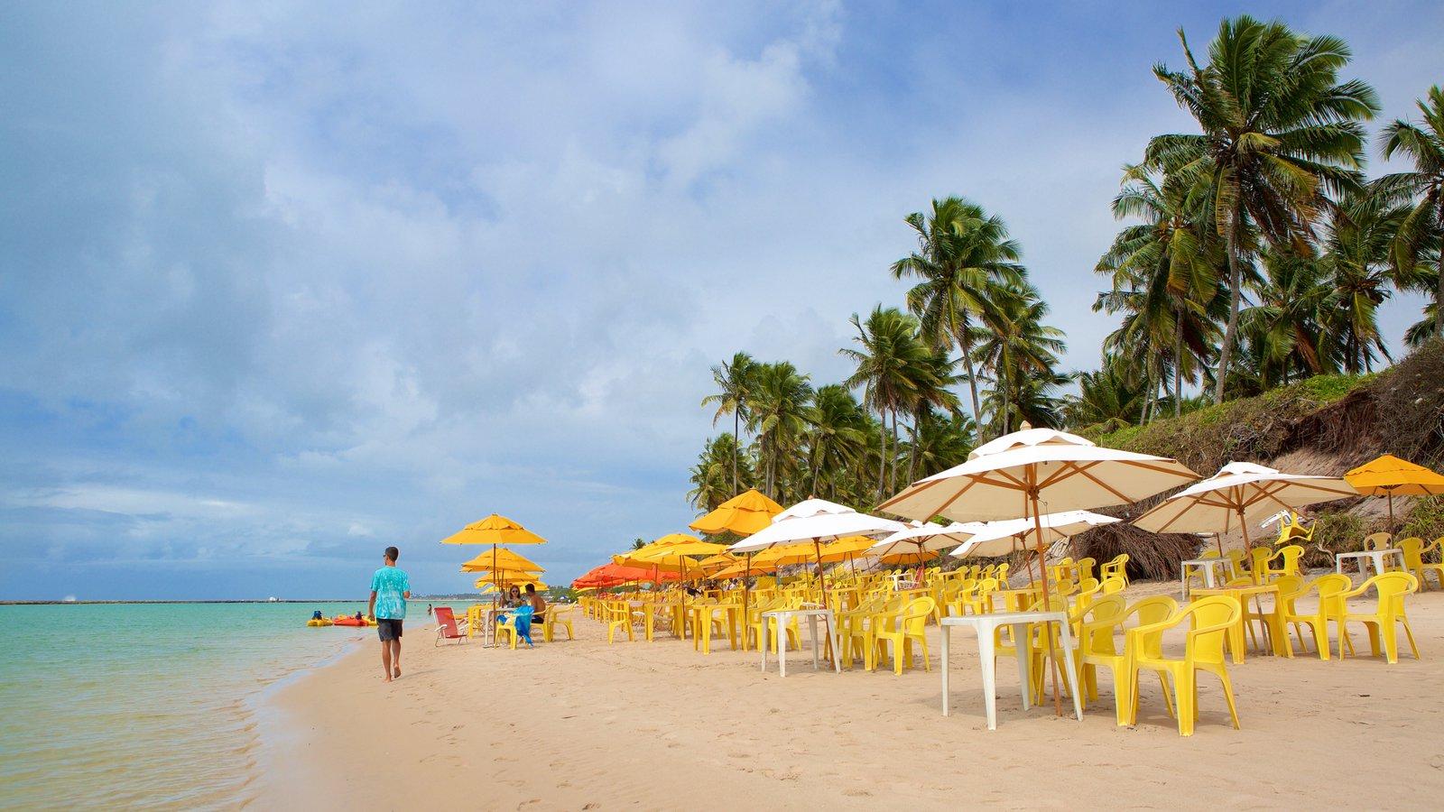 Ipojuca mostrando paisagens litorâneas, cenas tropicais e uma praia de areia