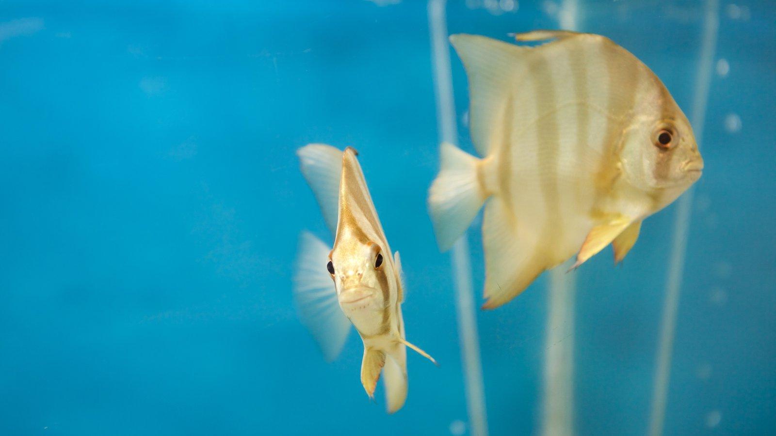 Escritório do Projeto Hippocampus mostrando vida marinha