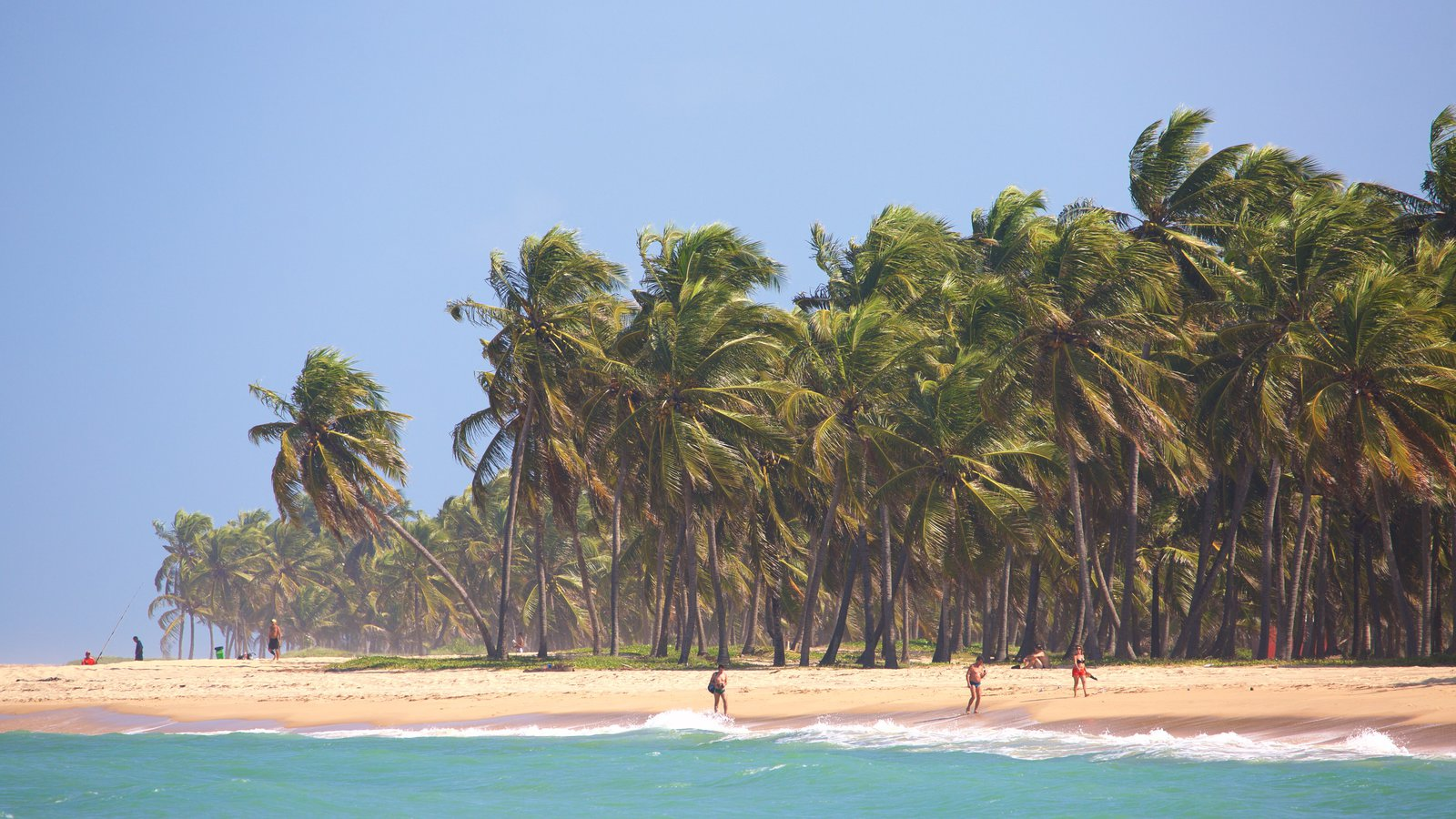 Maceió caracterizando uma praia de areia, cenas tropicais e paisagens litorâneas