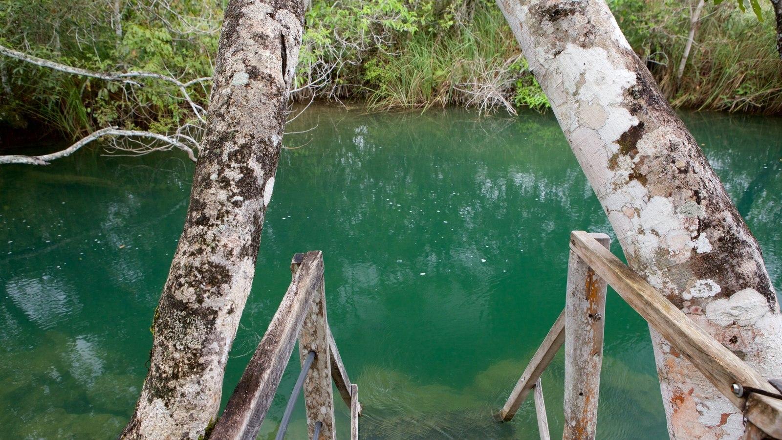 Parque Ecológico Rio Formoso mostrando um rio ou córrego