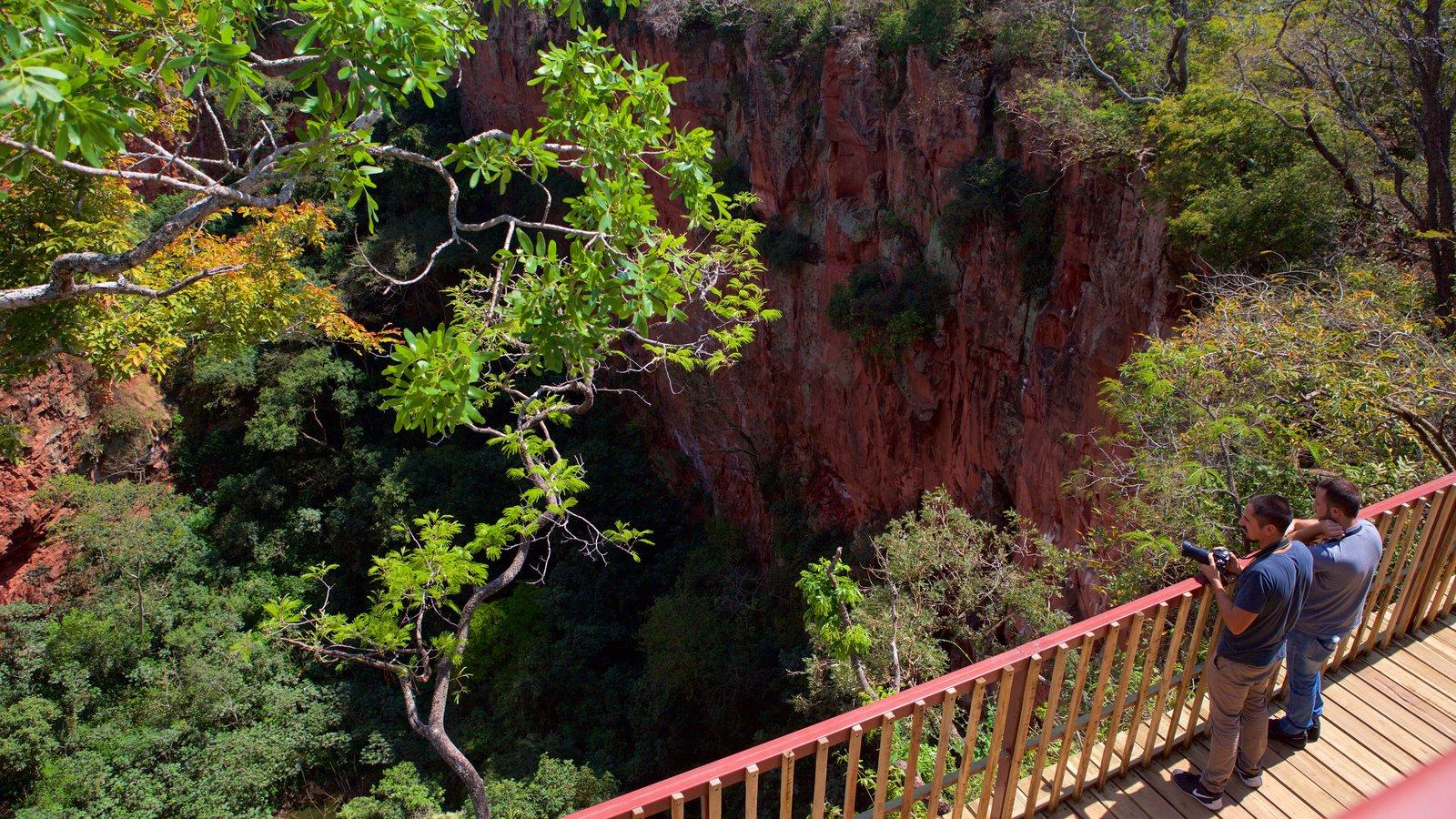 Bonito que inclui paisagens, um desfiladeiro ou canyon e florestas