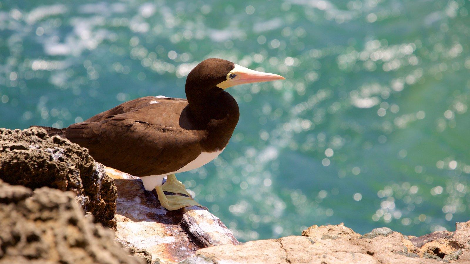 Fernando de Noronha que inclui vida das aves