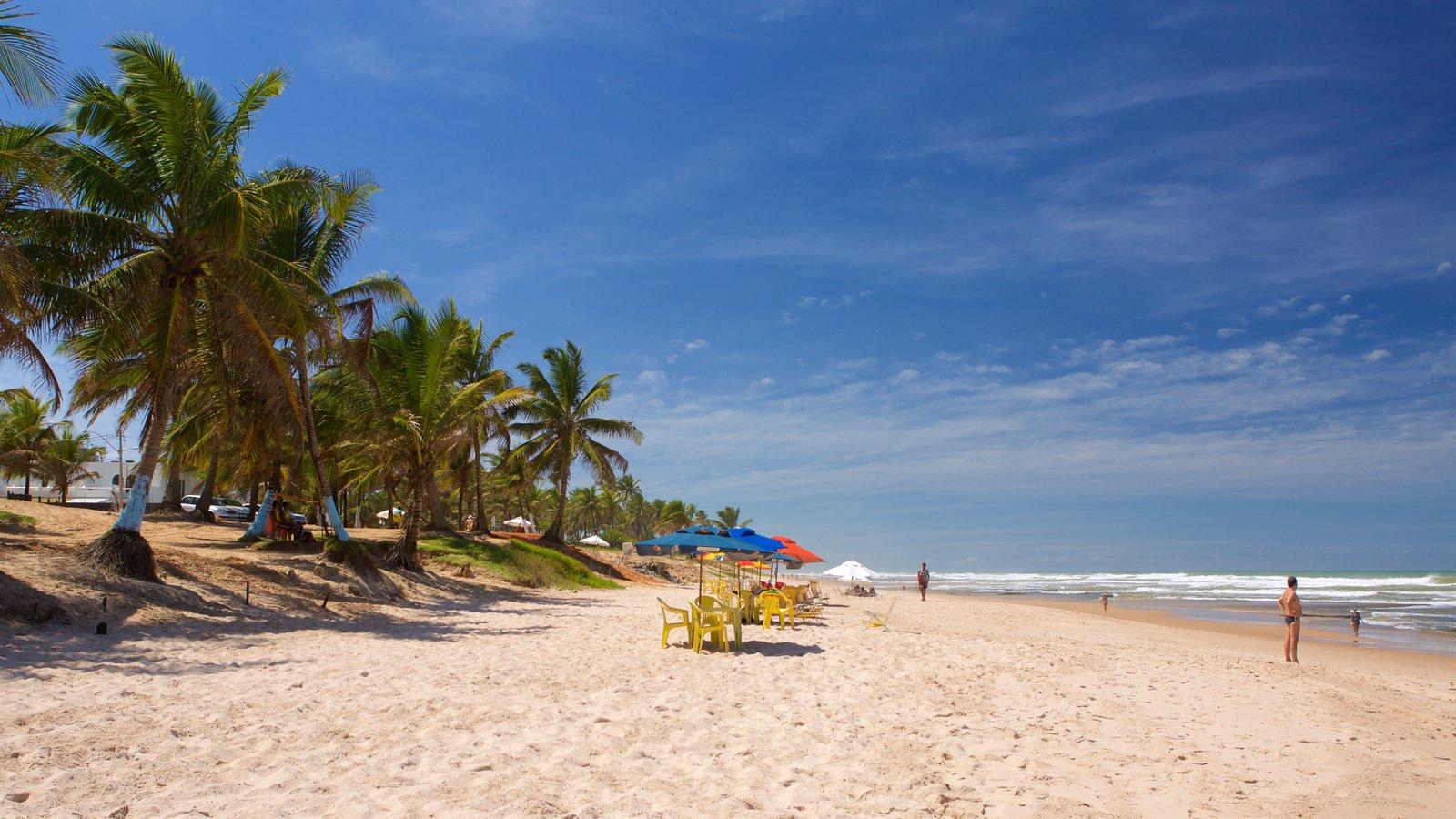 Flamengo Beach que inclui cenas tropicais, paisagens litorâneas e uma praia