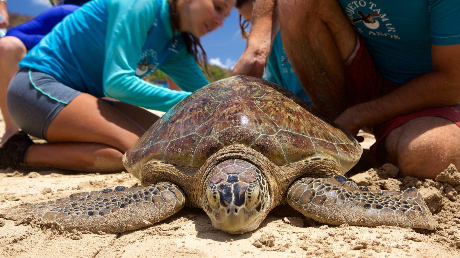Projeto Tamar mostrando vida marinha e uma praia