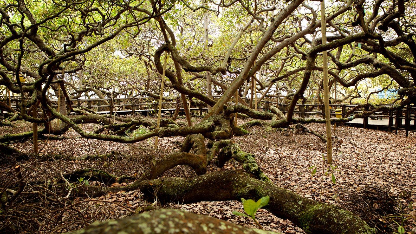 Cajueiro de Pirangi caracterizando um parque