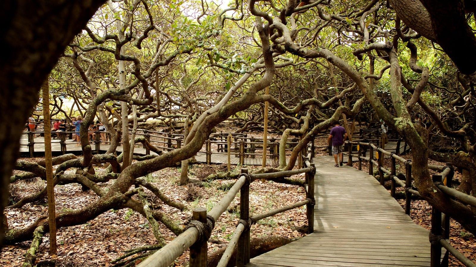 Cajueiro de Pirangi caracterizando um jardim