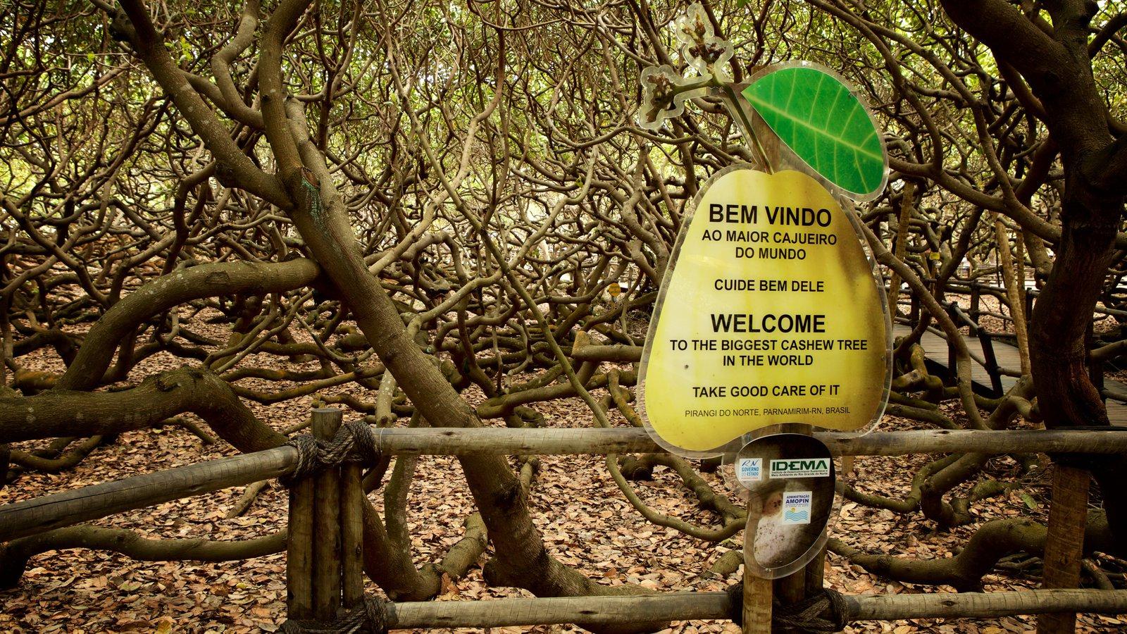 Cajueiro de Pirangi que inclui sinalização e um jardim