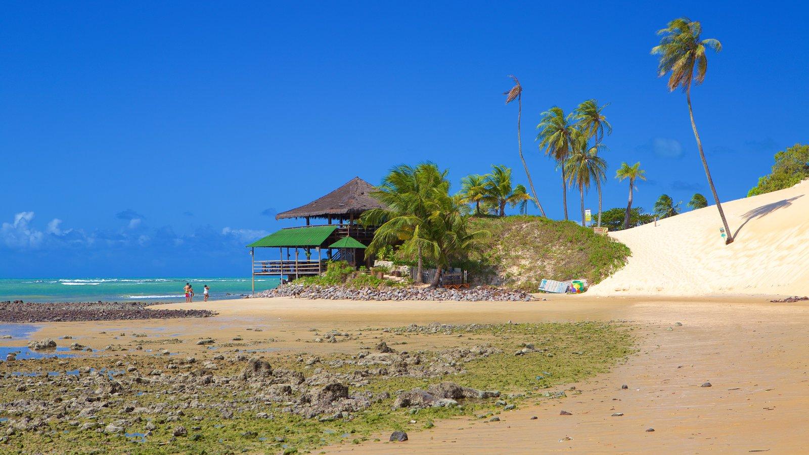 Praia de Genipabú que inclui cenas tropicais, uma praia de areia e paisagens litorâneas