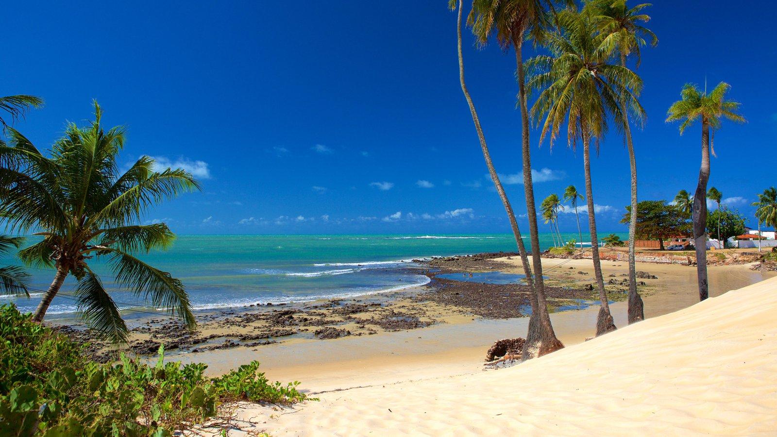 Praia de Genipabú mostrando paisagens litorâneas, uma praia e cenas tropicais