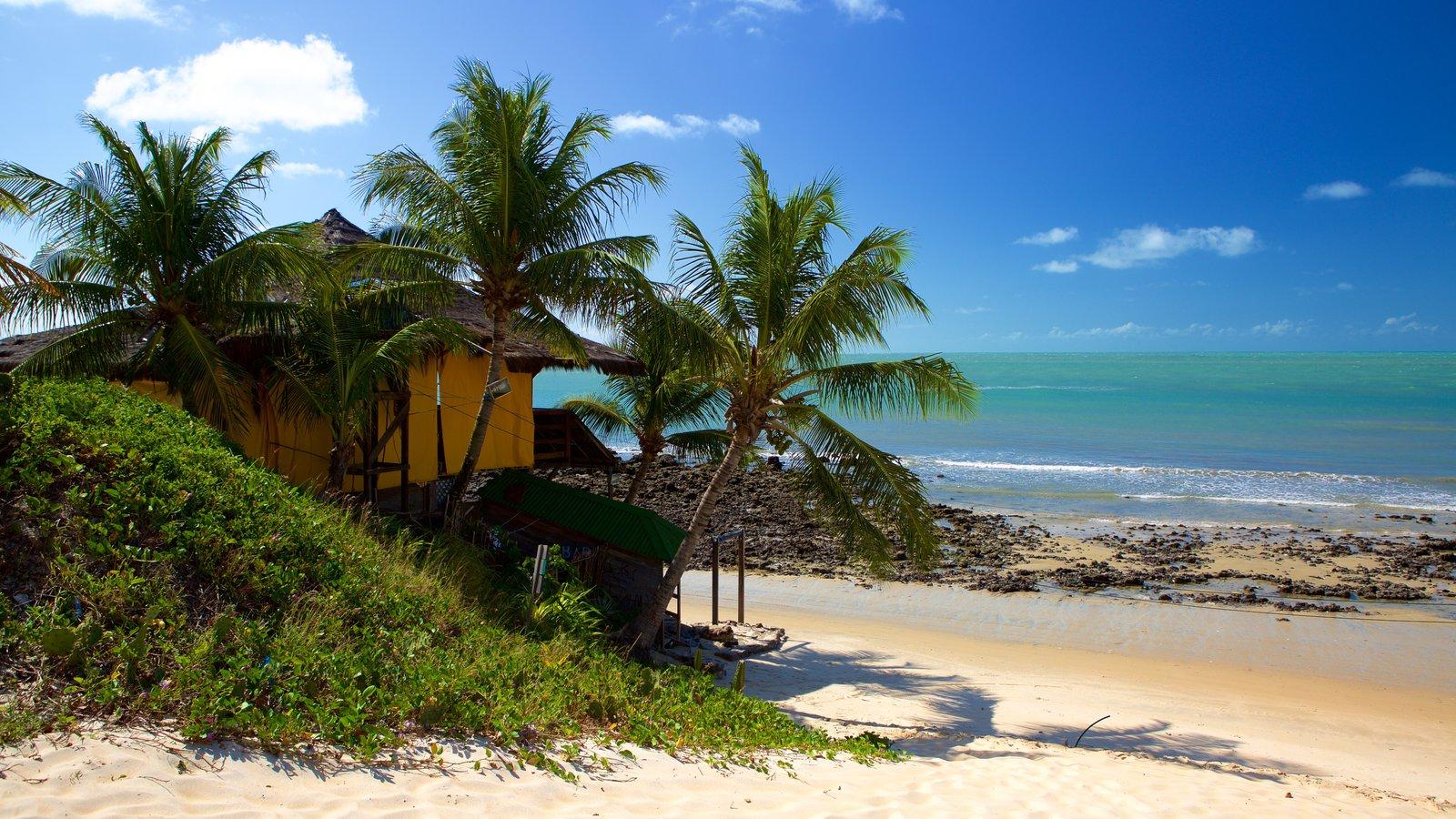 Praia de Genipabú caracterizando uma praia, paisagens litorâneas e cenas tropicais
