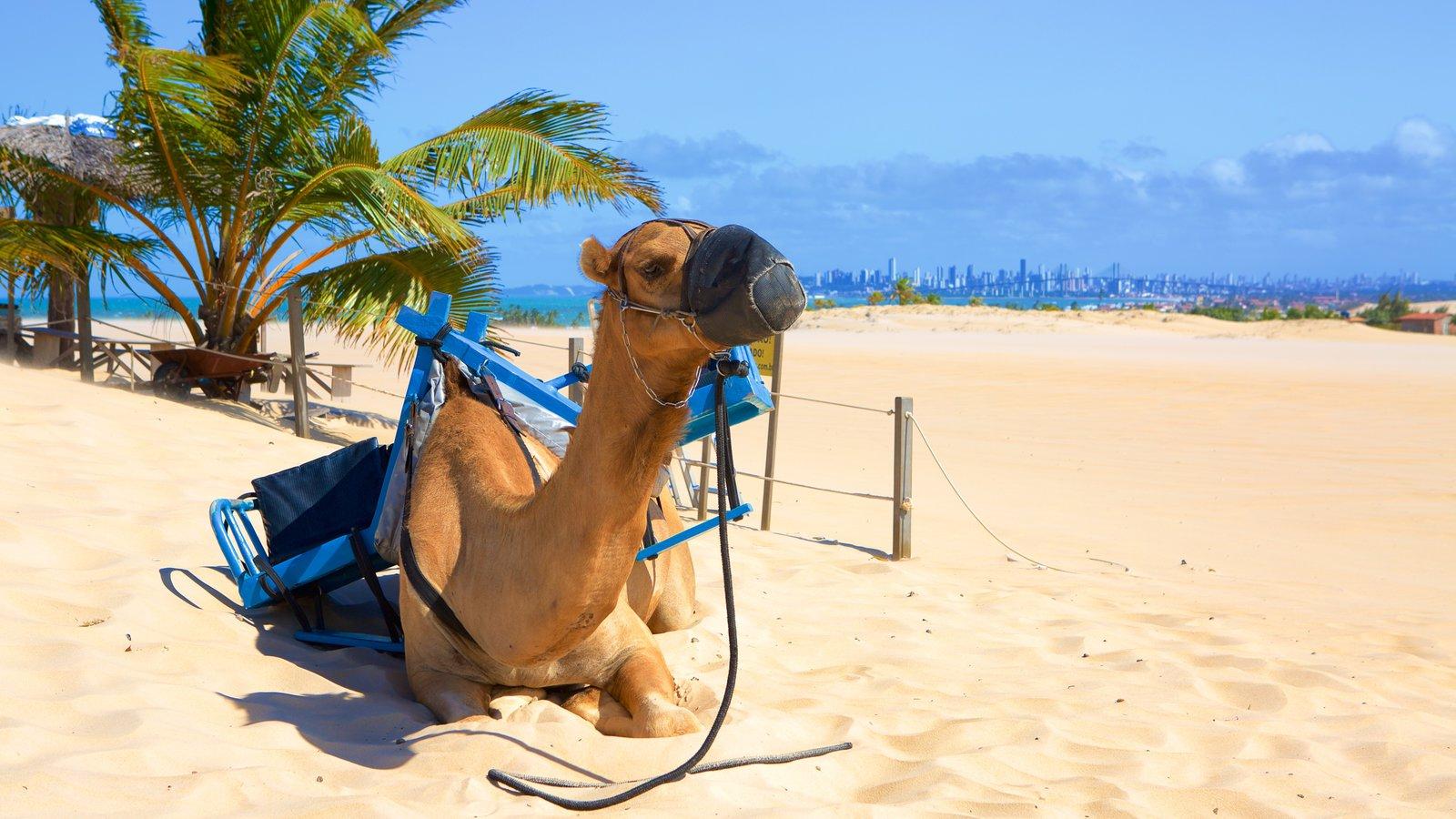 Praia de Genipabú caracterizando animais terrestres, paisagens litorâneas e uma praia de areia
