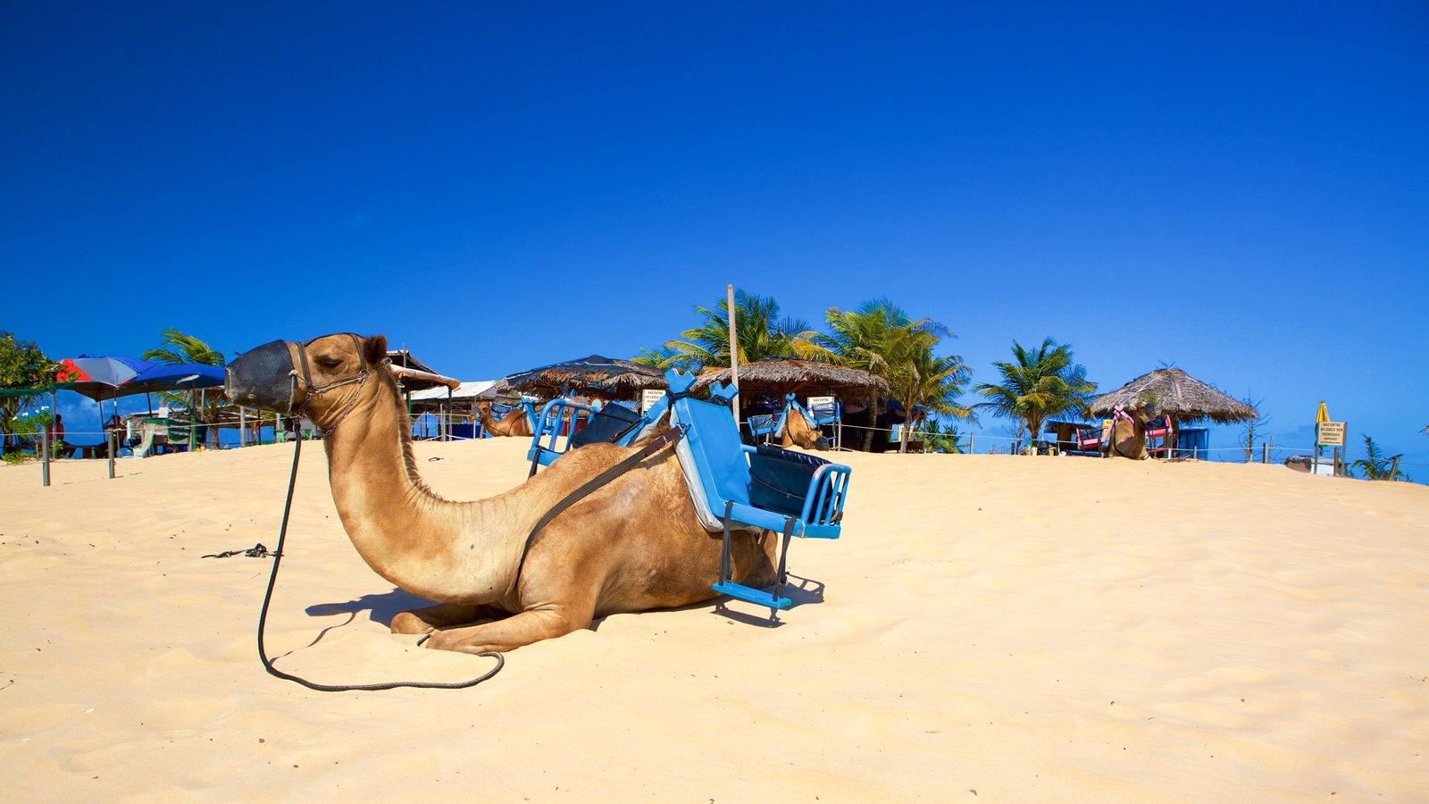 Praia de Genipabú mostrando uma praia de areia, animais terrestres e paisagens litorâneas