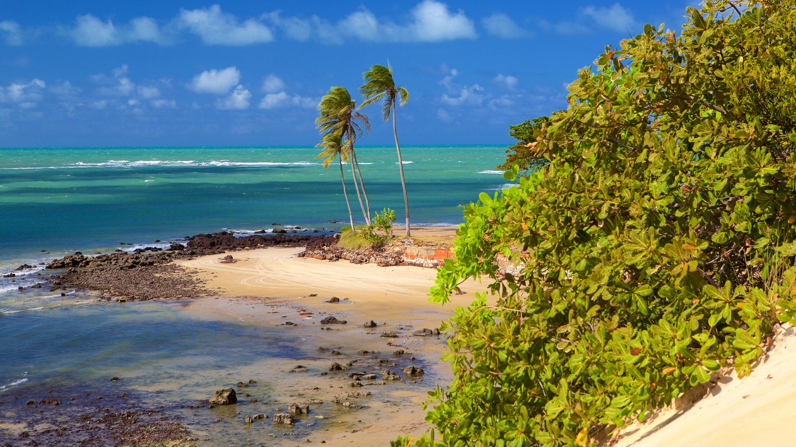 Praia de Genipabú mostrando cenas tropicais, paisagens litorâneas e uma praia de areia