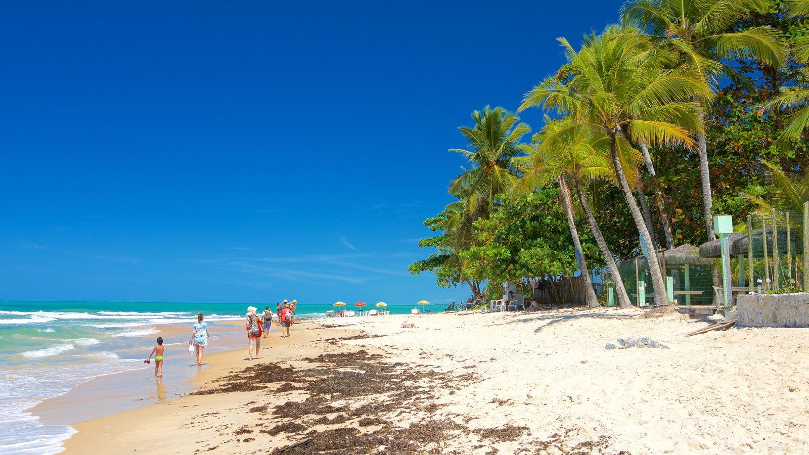 Praia de Pitinga que inclui uma praia de areia, paisagens litorâneas e cenas tropicais