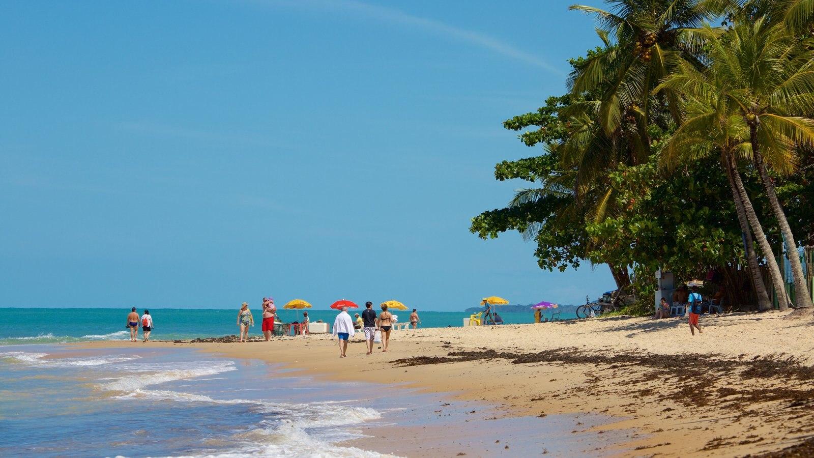 Praia de Pitinga mostrando cenas tropicais, paisagens litorâneas e uma praia