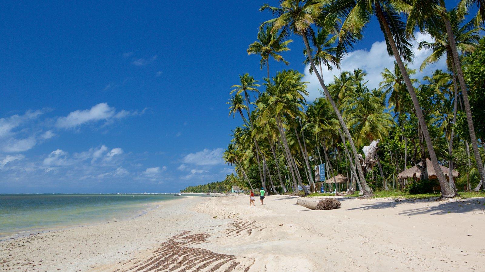 Tamandaré caracterizando paisagens litorâneas, uma praia e cenas tropicais